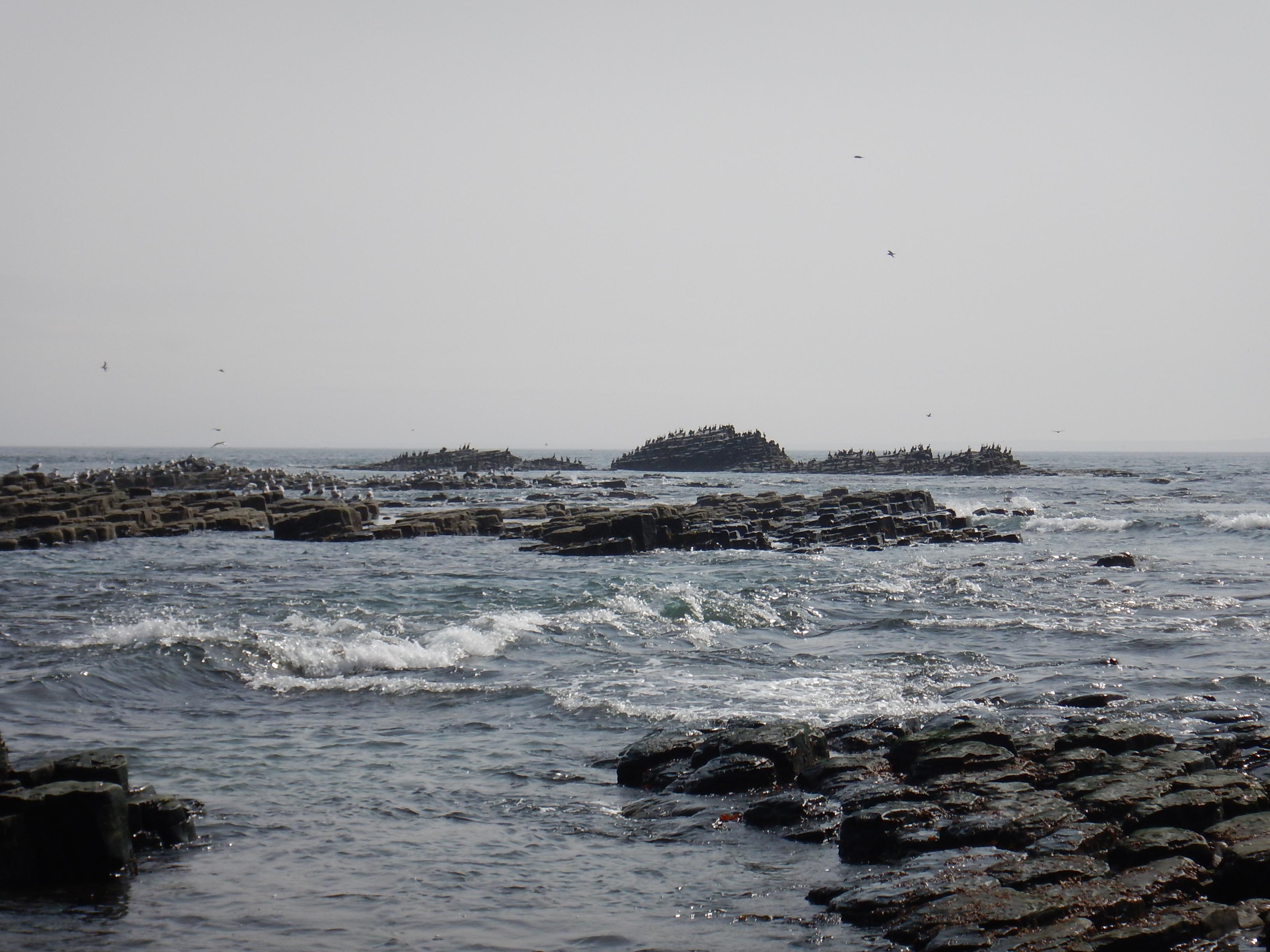 Курилы, остров Шумшу, птичий базар